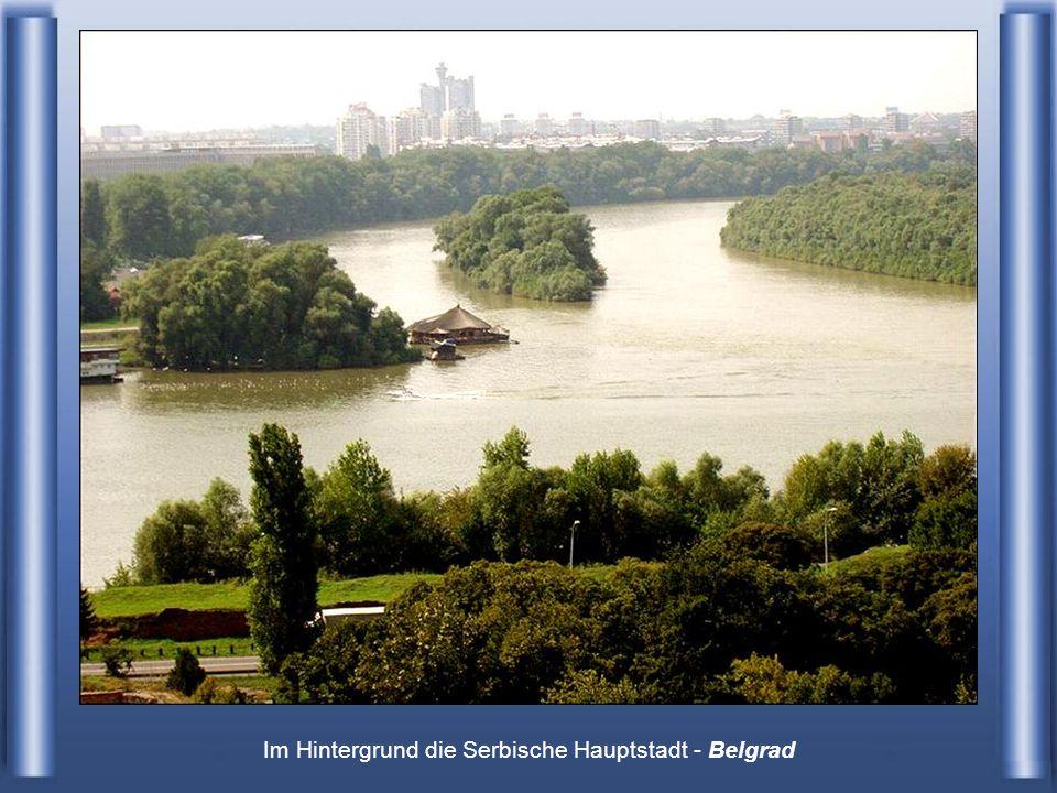 Im Hintergrund die Serbische Hauptstadt - Belgrad