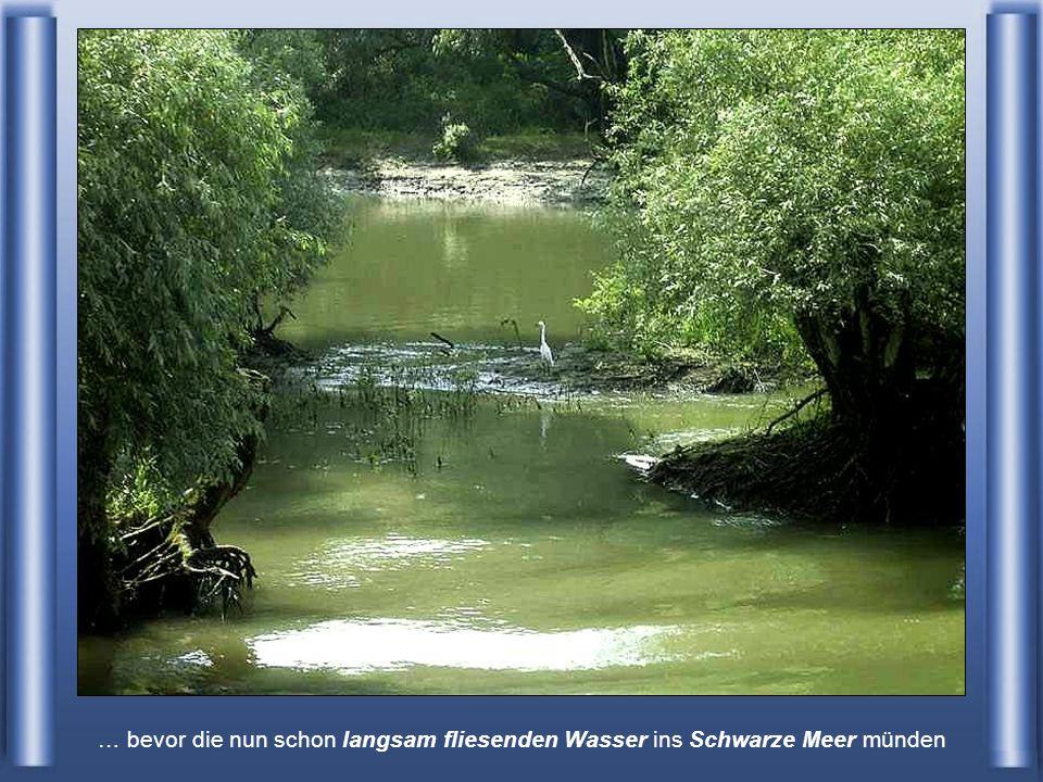 Seitenarme der Donau auf ukrainischem Territorium …