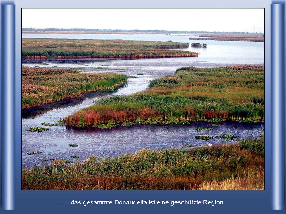 … das gesammte Donaudelta ist eine geschützte Region