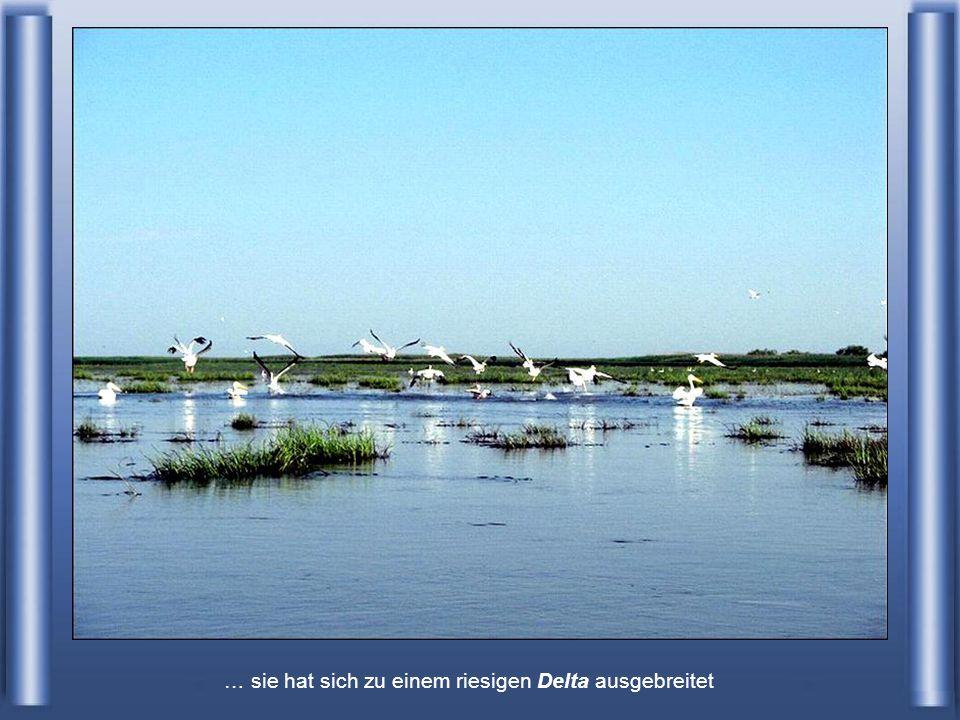 hier schon hat die Donau aufgehört ein Strom zu sein