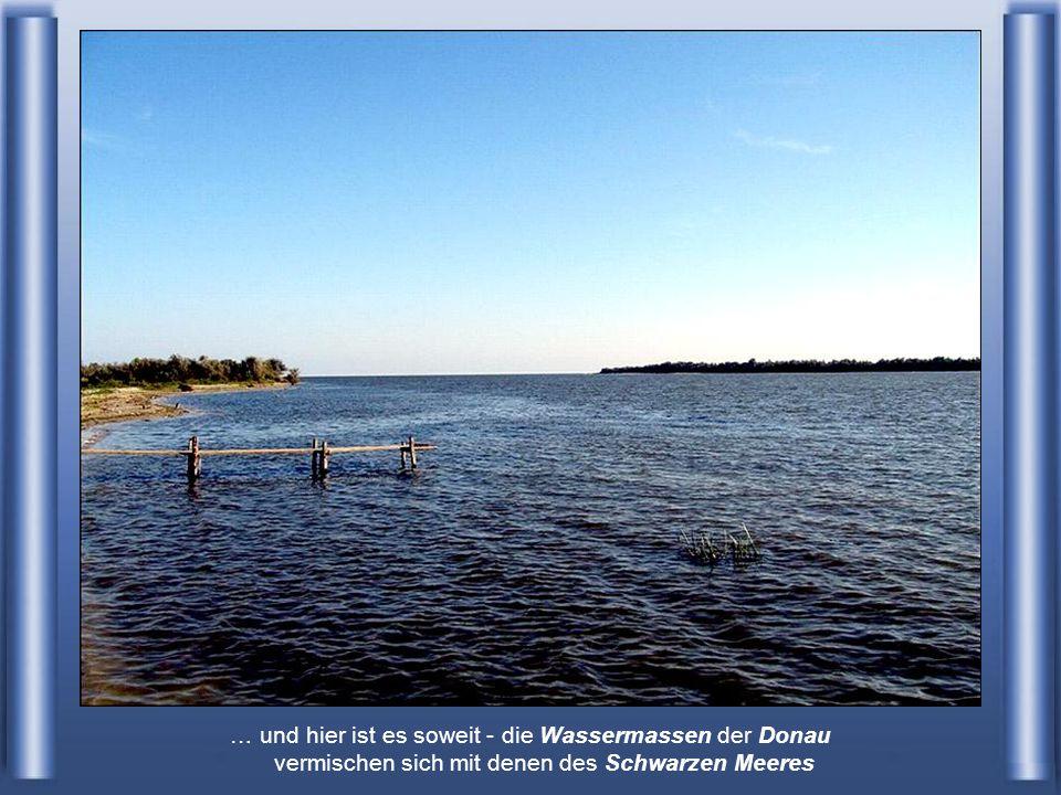 … wo See und Flussvögel aller Arten vorkommen