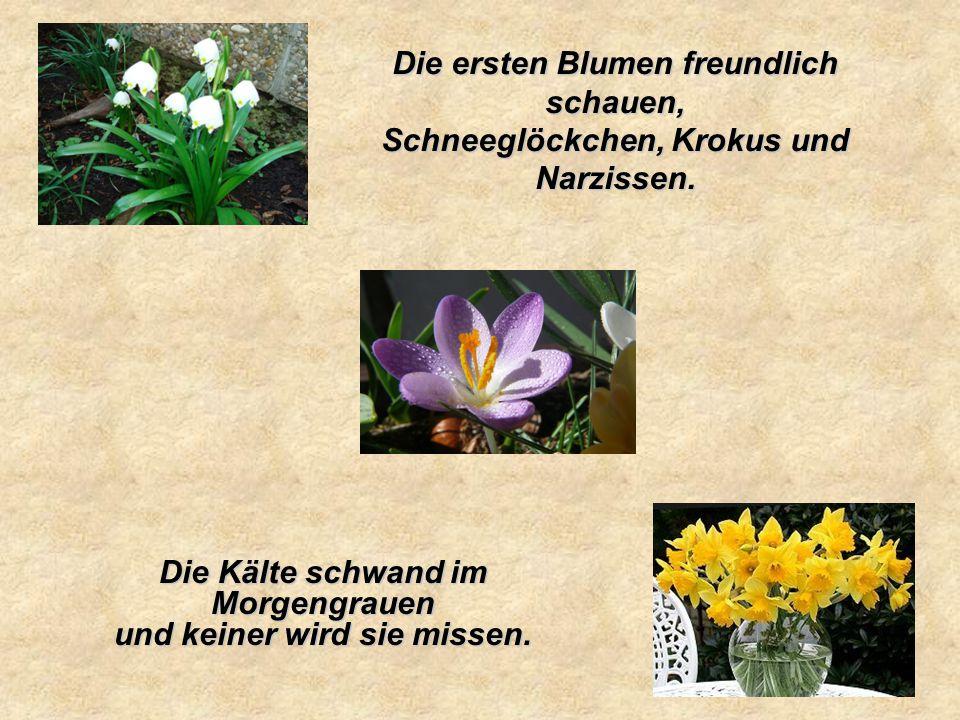 Die ersten Blumen freundlich schauen, Schneeglöckchen, Krokus und Narzissen.