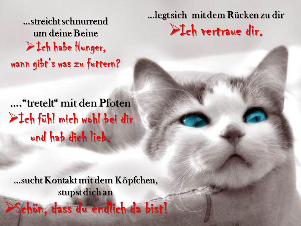Was uns Samtpfoten wirklich sagen wollen Das wollen uns Katzen mit ihrer Körpersprache sagen