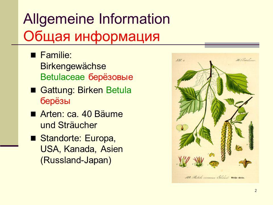 2 Allgemeine Information Общая информация Familie: Birkengewächse Betulaceae берëзовые Gattung: Birken Betula берëзы Arten: ca. 40 Bäume und Sträucher