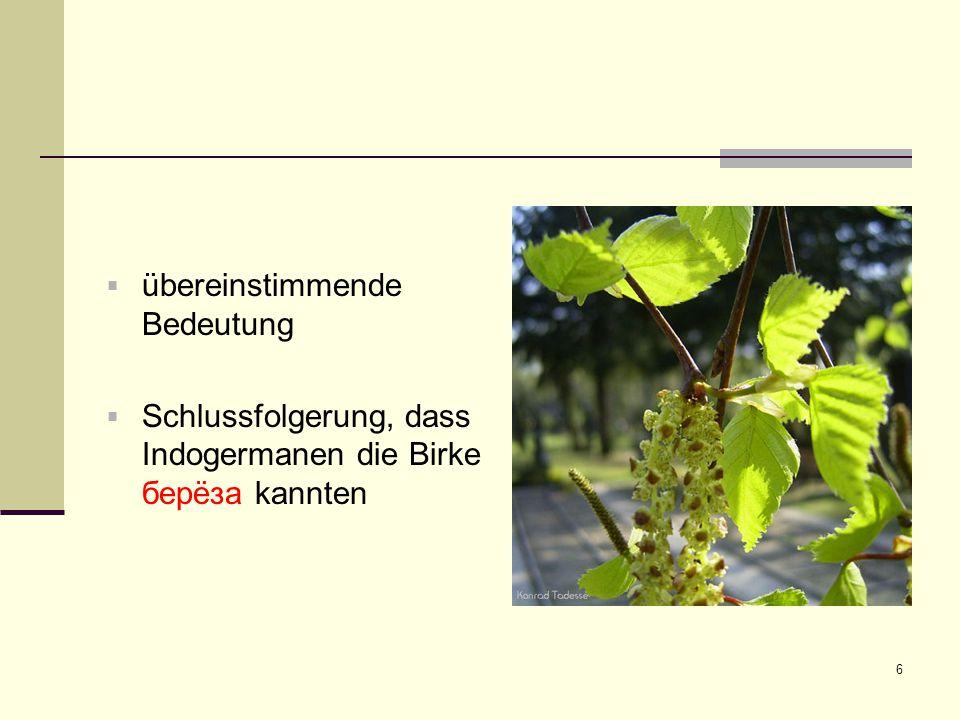 6  übereinstimmende Bedeutung  Schlussfolgerung, dass Indogermanen die Birke берëза kannten