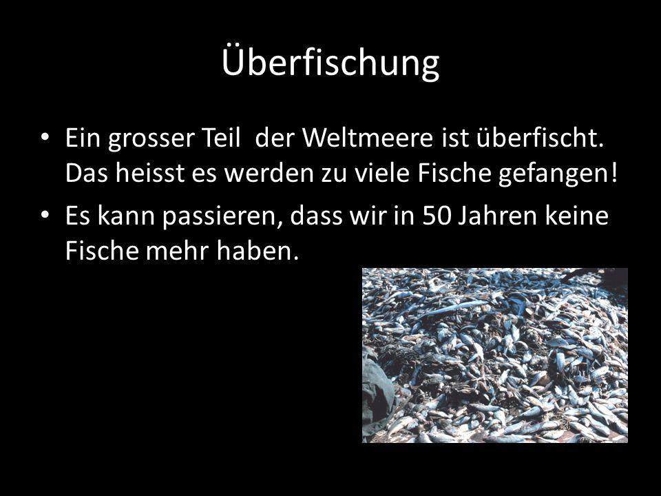 Überfischung Ein grosser Teil der Weltmeere ist überfischt. Das heisst es werden zu viele Fische gefangen! Es kann passieren, dass wir in 50 Jahren ke