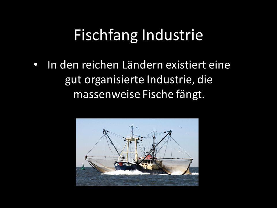 Fischfang Industrie In den reichen Ländern existiert eine gut organisierte Industrie, die massenweise Fische fängt.