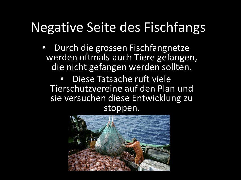 Negative Seite des Fischfangs Durch die grossen Fischfangnetze werden oftmals auch Tiere gefangen, die nicht gefangen werden sollten. Diese Tatsache r