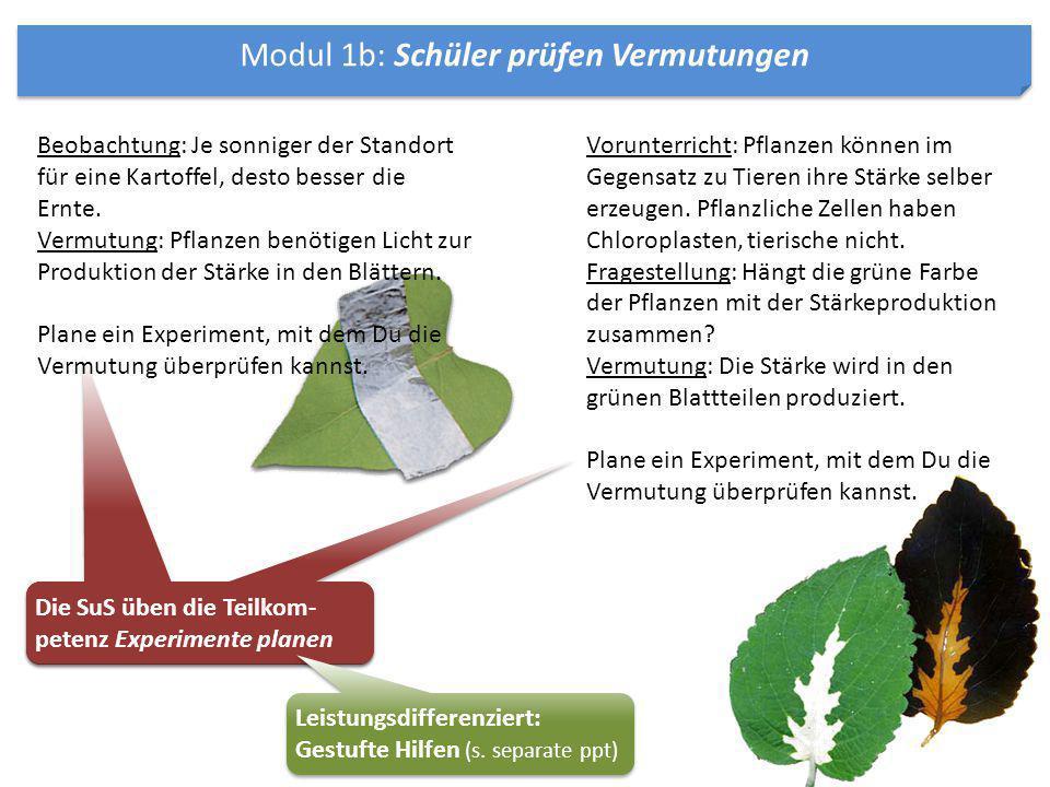 Modul 1b: Schüler prüfen Vermutungen Vorunterricht: Pflanzen können im Gegensatz zu Tieren ihre Stärke selber erzeugen. Pflanzliche Zellen haben Chlor