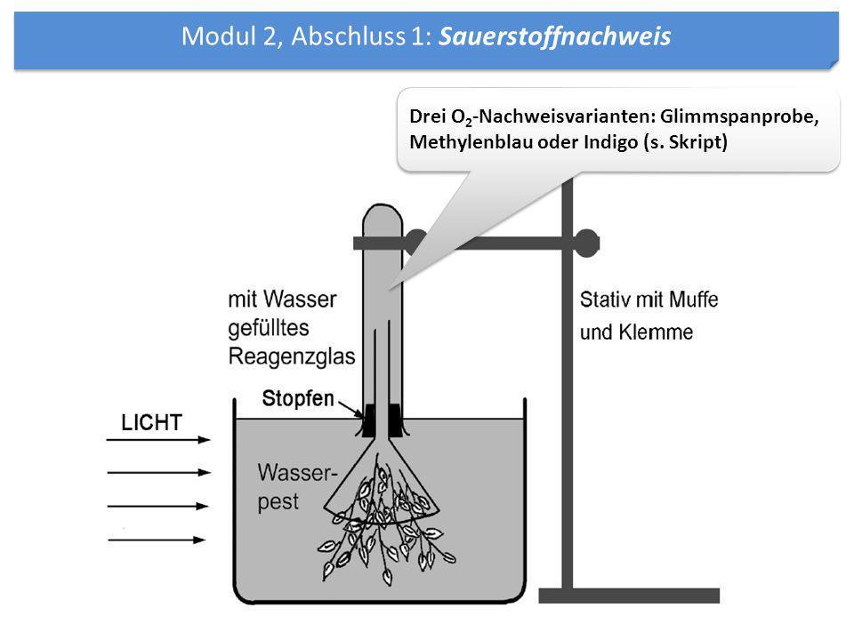 Modul 2, Abschluss 1: Sauerstoffnachweis Drei O 2 -Nachweisvarianten: Glimmspanprobe, Methylenblau oder Indigo (s. Skript)