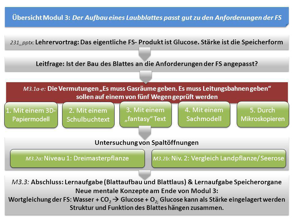 """Übersicht Modul 3: Der Aufbau eines Laubblattes passt gut zu den Anforderungen der FS M3.1a-e: Die Vermutungen """"Es muss Gasräume geben. Es muss Leitun"""