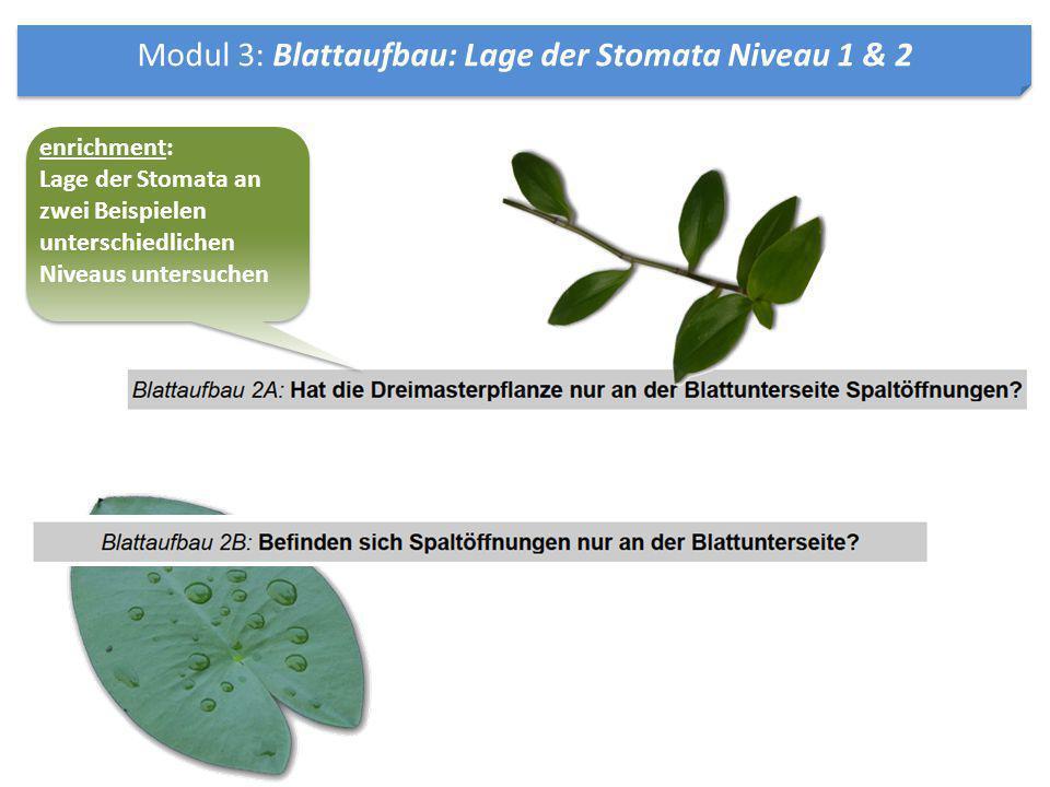 Modul 3: Blattaufbau: Lage der Stomata Niveau 1 & 2 enrichment: Lage der Stomata an zwei Beispielen unterschiedlichen Niveaus untersuchen enrichment: