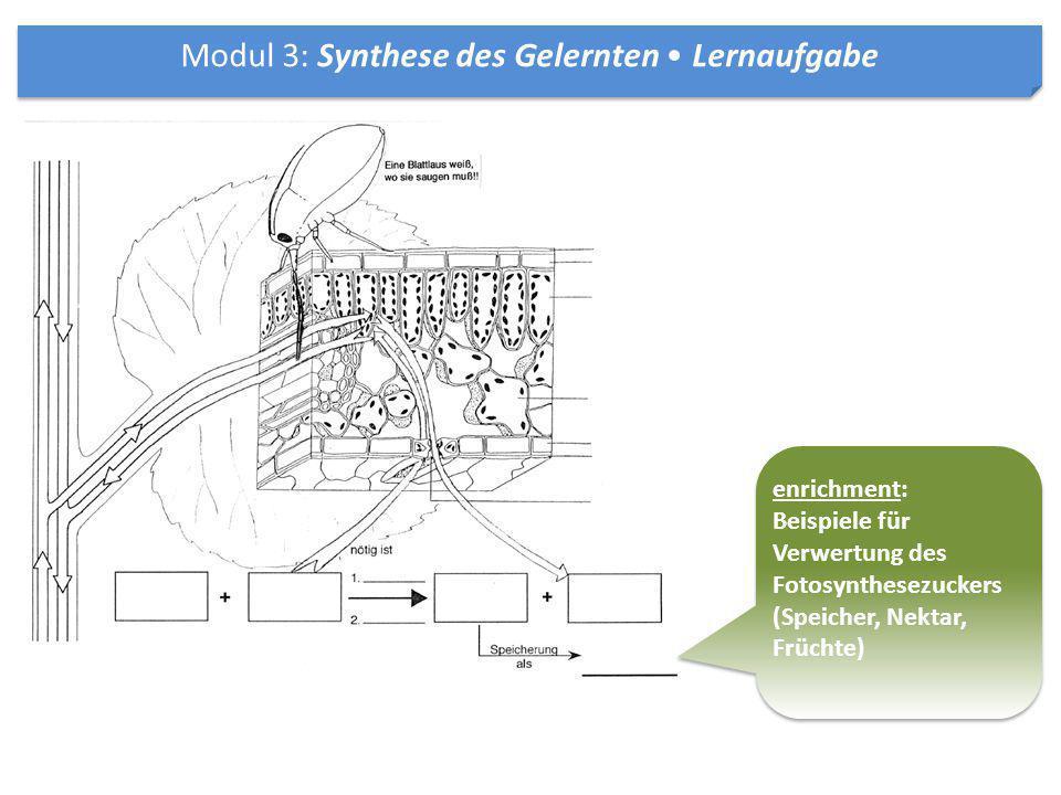 enrichment: Beispiele für Verwertung des Fotosynthesezuckers (Speicher, Nektar, Früchte) enrichment: Beispiele für Verwertung des Fotosynthesezuckers