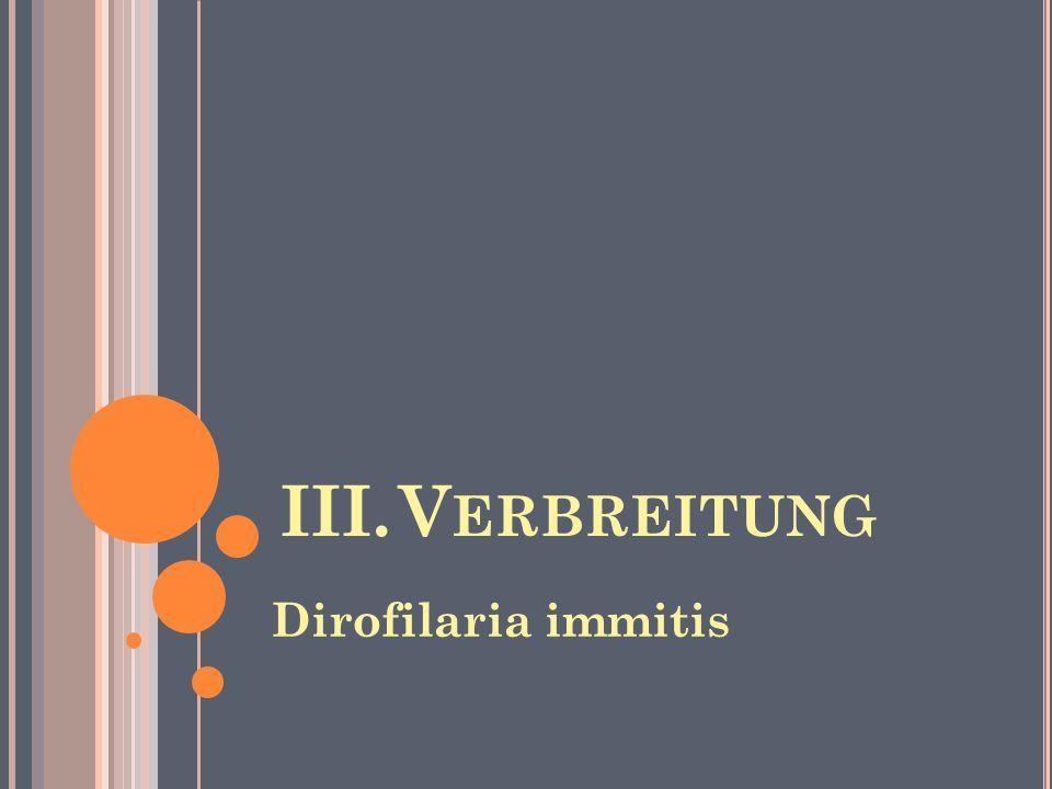 III.V ERBREITUNG Dirofilaria immitis