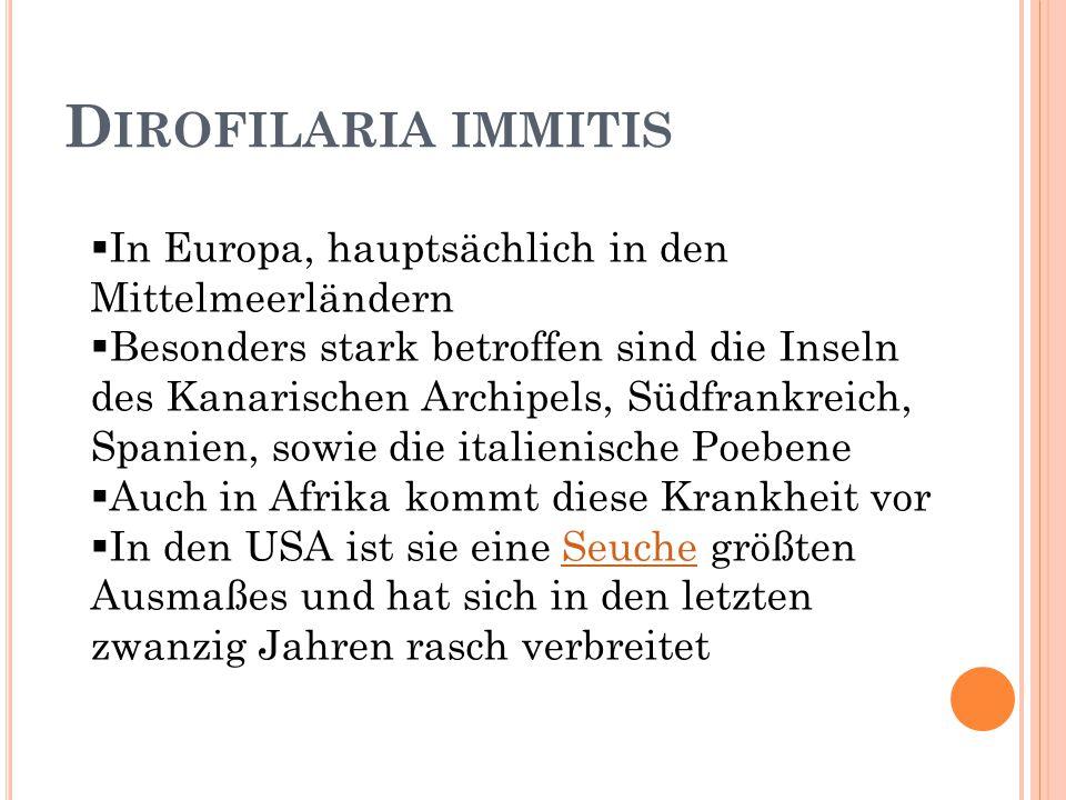 D IROFILARIA IMMITIS  In Europa, hauptsächlich in den Mittelmeerländern  Besonders stark betroffen sind die Inseln des Kanarischen Archipels, Südfra