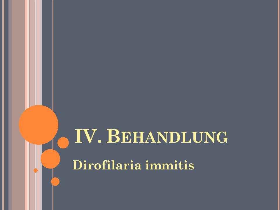 IV.B EHANDLUNG Dirofilaria immitis