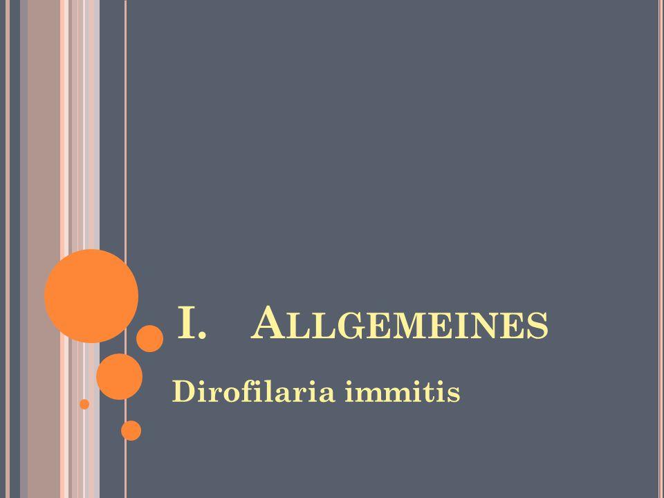 I.A LLGEMEINES Dirofilaria immitis