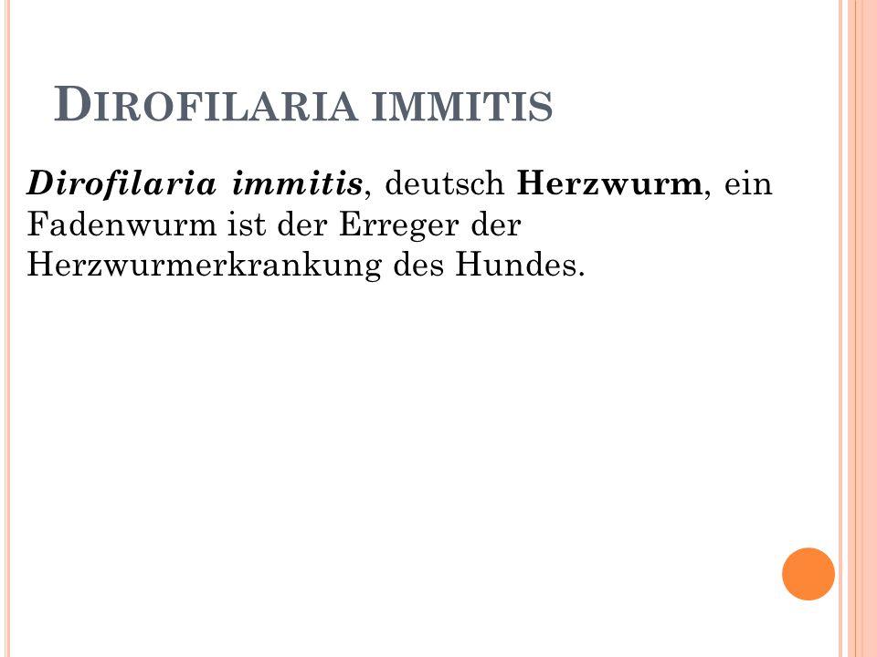 D IROFILARIA IMMITIS Dirofilaria immitis, deutsch Herzwurm, ein Fadenwurm ist der Erreger der Herzwurmerkrankung des Hundes.
