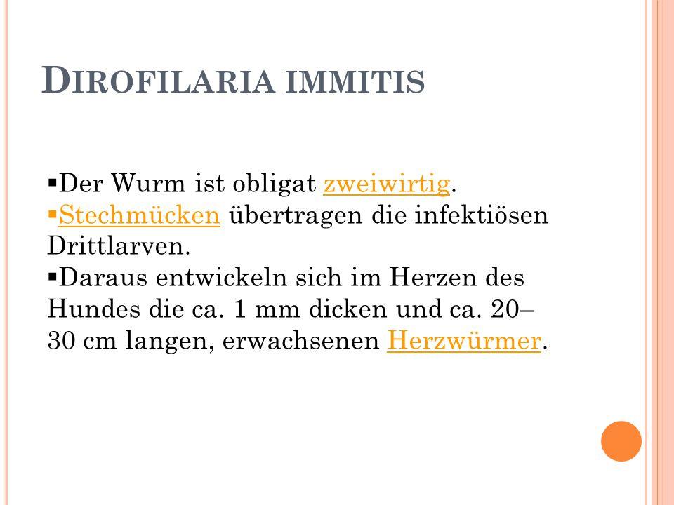 D IROFILARIA IMMITIS  Der Wurm ist obligat zweiwirtig.  Stechmücken übertragen die infektiösen Drittlarven.  Daraus entwickeln sich im Herzen des H