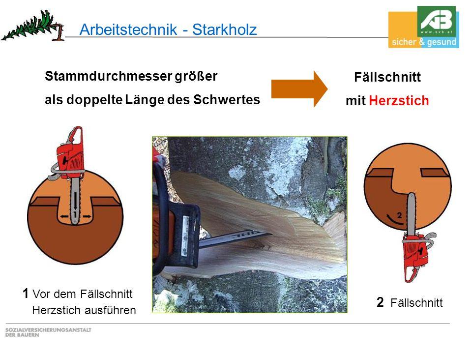 Arbeitstechnik - Starkholz 1 Vor dem Fällschnitt Herzstich ausführen 2 Fällschnitt Stammdurchmesser größer als doppelte Länge des Schwertes Fällschnit