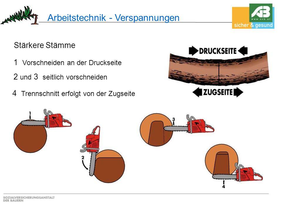 Arbeitstechnik - Verspannungen 2 und 3 seitlich vorschneiden 1 Vorschneiden an der Druckseite Stärkere Stämme 4 Trennschnitt erfolgt von der Zugseite