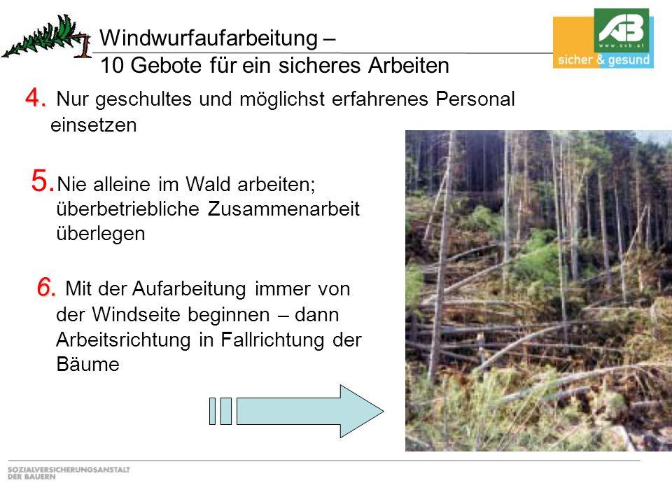 6. 6. Mit der Aufarbeitung immer von der Windseite beginnen – dann Arbeitsrichtung in Fallrichtung der Bäume 5. Nie alleine im Wald arbeiten; überbetr