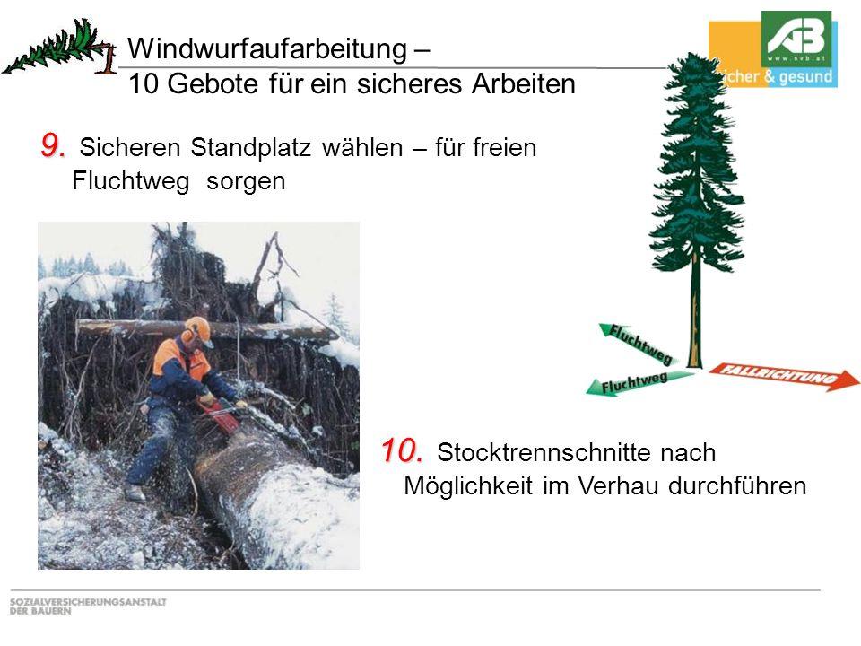 10. 10. Stocktrennschnitte nach Möglichkeit im Verhau durchführen 9. 9. Sicheren Standplatz wählen – für freien Fluchtweg sorgen Windwurfaufarbeitung