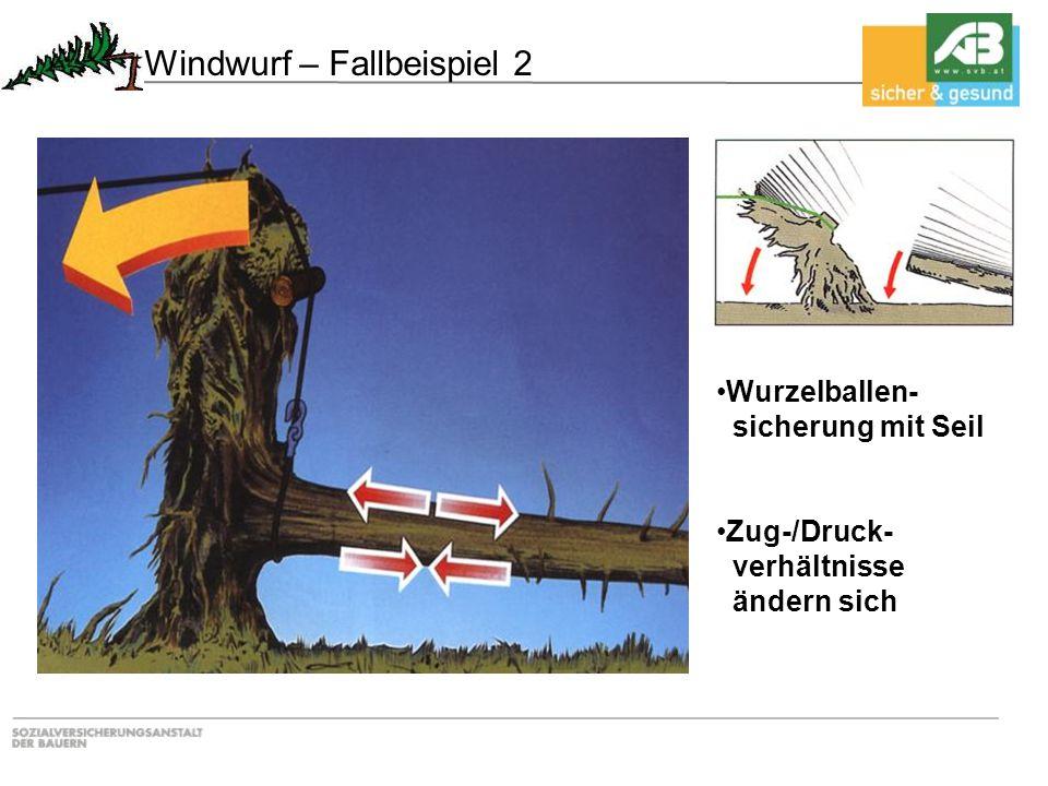 Wurzelballen- sicherung mit Seil Zug-/Druck- verhältnisse ändern sich Windwurf – Fallbeispiel 2