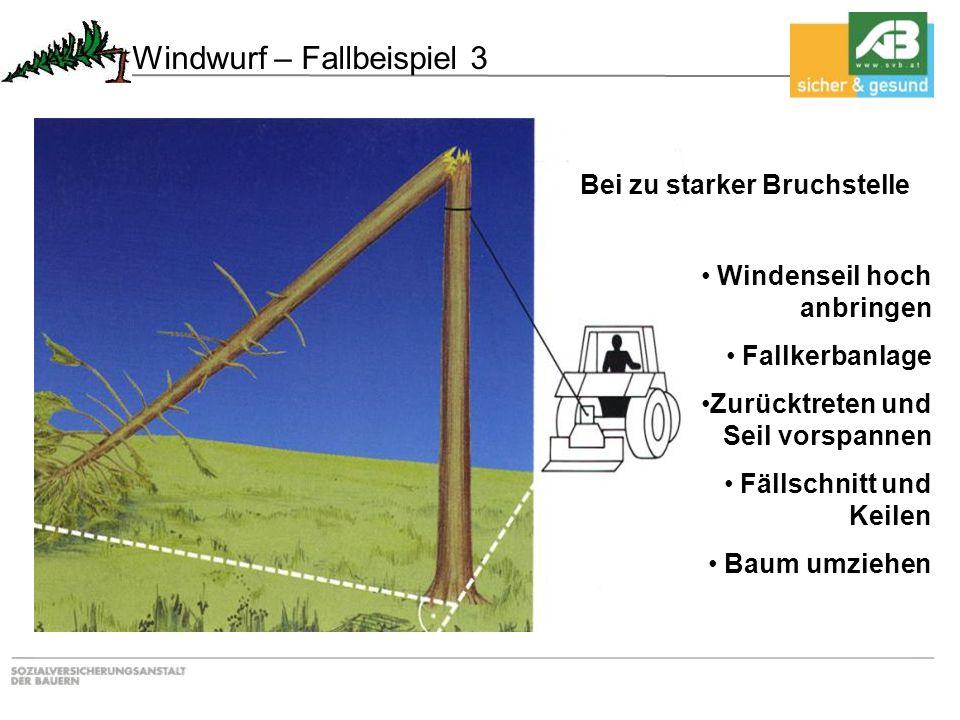 Bei zu starker Bruchstelle Windenseil hoch anbringen Fallkerbanlage Zurücktreten und Seil vorspannen Fällschnitt und Keilen Baum umziehen Windwurf – F