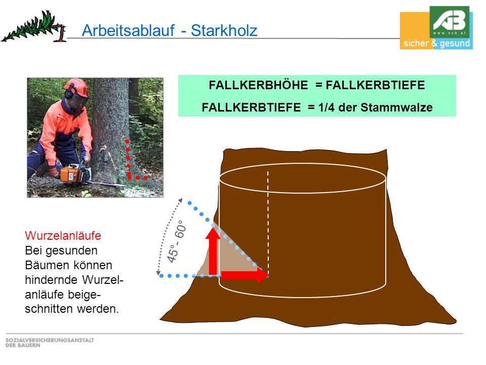 45°- 60° Wurzelanläufe Bei gesunden Bäumen können hindernde Wurzel- anläufe beige- schnitten werden. Arbeitsablauf - Starkholz FALLKERBHÖHE = FALLKERB