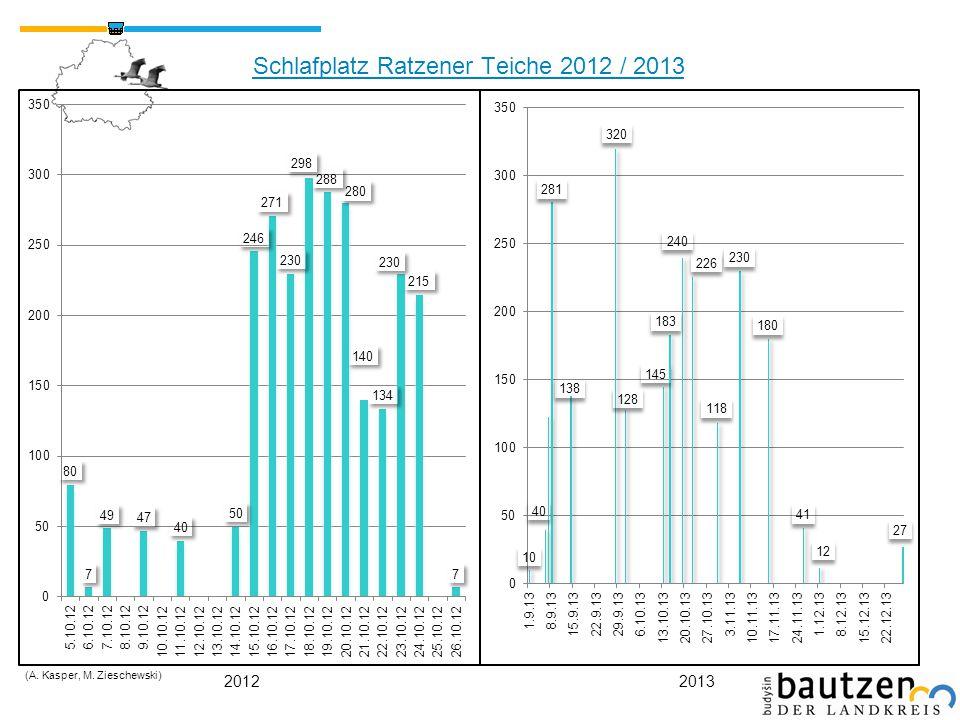 Schlafplatz Ratzener Teiche 2012 / 2013 (A. Kasper, M. Zieschewski) 20122013