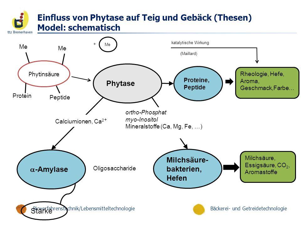 Bäckerei- und GetreidetechnologieBioverfahrenstechnik/Lebensmitteltechnologie Einfluss von Phytase auf Teig und Gebäck (Thesen) Model: schematisch Phytase Milchsäure- bakterien, Hefen  -Amylase Milchsäure, Essigsäure, CO 2, Aromastoffe Stärke Calciumionen, Ca 2 + ortho-Phosphat myo-Inositol Mineralstoffe (Ca, Mg, Fe, …) Oligosaccharide Proteine, Peptide Rheologie, Hefe, Aroma, Geschmack,Farbe… Phytinsäure Me Protein Peptide Me + katalytische Wirkung (Maillard)