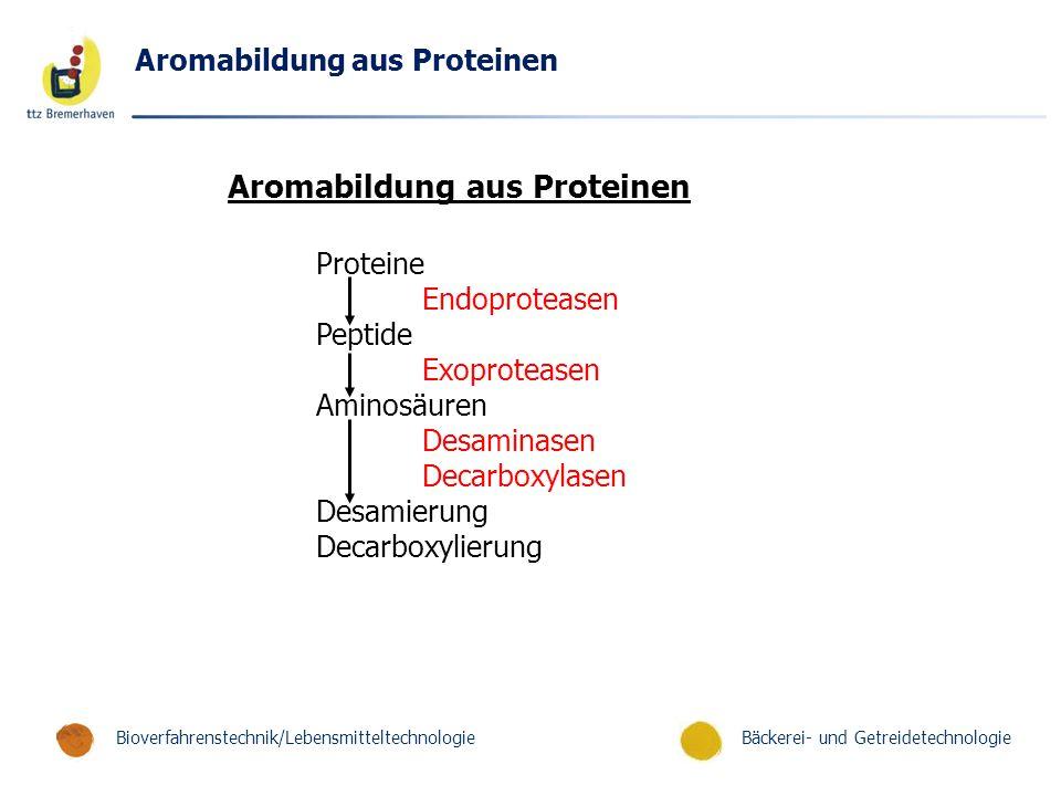 Bäckerei- und GetreidetechnologieBioverfahrenstechnik/Lebensmitteltechnologie Aromabildung aus Proteinen Proteine Endoproteasen Peptide Exoproteasen Aminosäuren Desaminasen Decarboxylasen Desamierung Decarboxylierung Aromabildung aus Proteinen