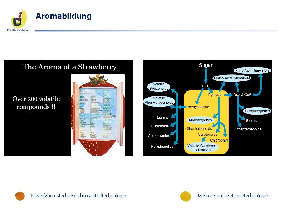 Bäckerei- und GetreidetechnologieBioverfahrenstechnik/Lebensmitteltechnologie Aromabildung