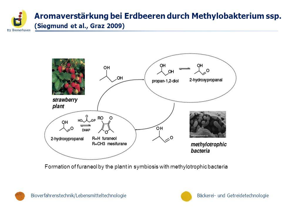 Bäckerei- und GetreidetechnologieBioverfahrenstechnik/Lebensmitteltechnologie Aromaverstärkung bei Erdbeeren durch Methylobakterium ssp. (Siegmund et