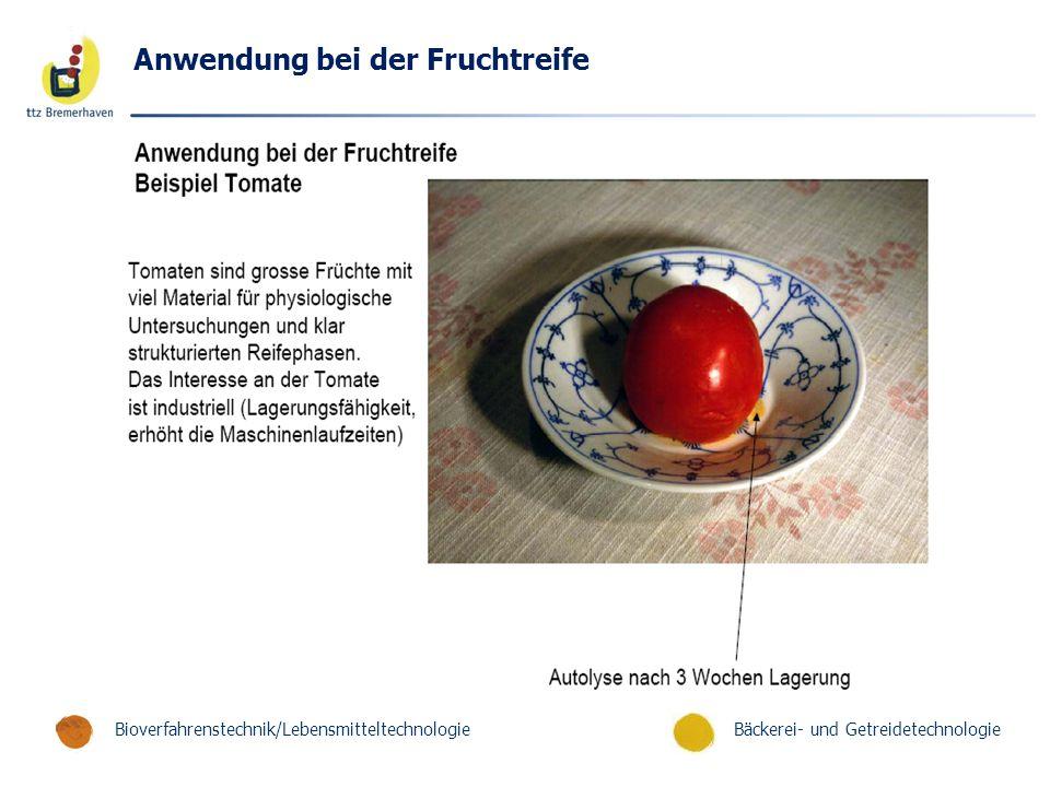 Bäckerei- und GetreidetechnologieBioverfahrenstechnik/Lebensmitteltechnologie Anwendung bei der Fruchtreife