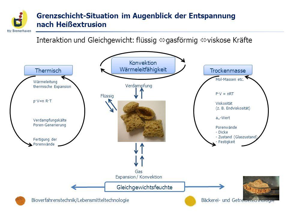 Bäckerei- und GetreidetechnologieBioverfahrenstechnik/Lebensmitteltechnologie Grenzschicht-Situation im Augenblick der Entspannung nach Heißextrusion
