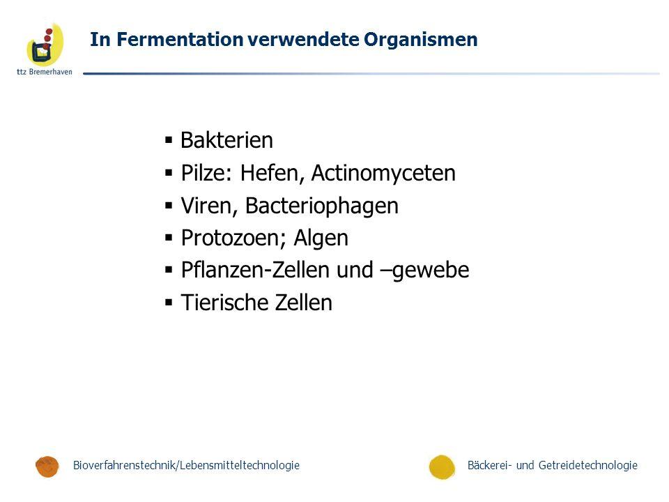 Bäckerei- und GetreidetechnologieBioverfahrenstechnik/Lebensmitteltechnologie In Fermentation verwendete Organismen  Bakterien  Pilze: Hefen, Actino