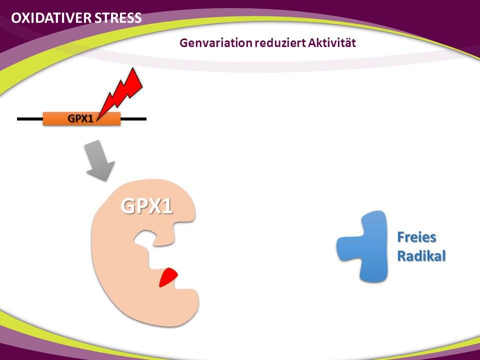 GPX1 GPX1 OXIDATIVER STRESS Genvariation reduziert Aktivität Freies Radikal