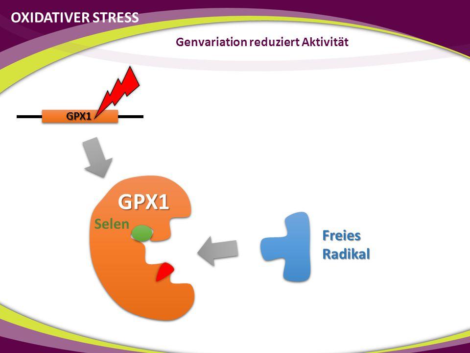 GPX1 GPX1 Selen OXIDATIVER STRESS Genvariation reduziert Aktivität Freies Radikal