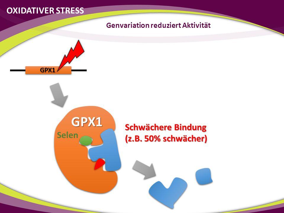 GPX1 GPX1 Schwächere Bindung (z.B. 50% schwächer) OXIDATIVER STRESS Genvariation reduziert Aktivität Selen