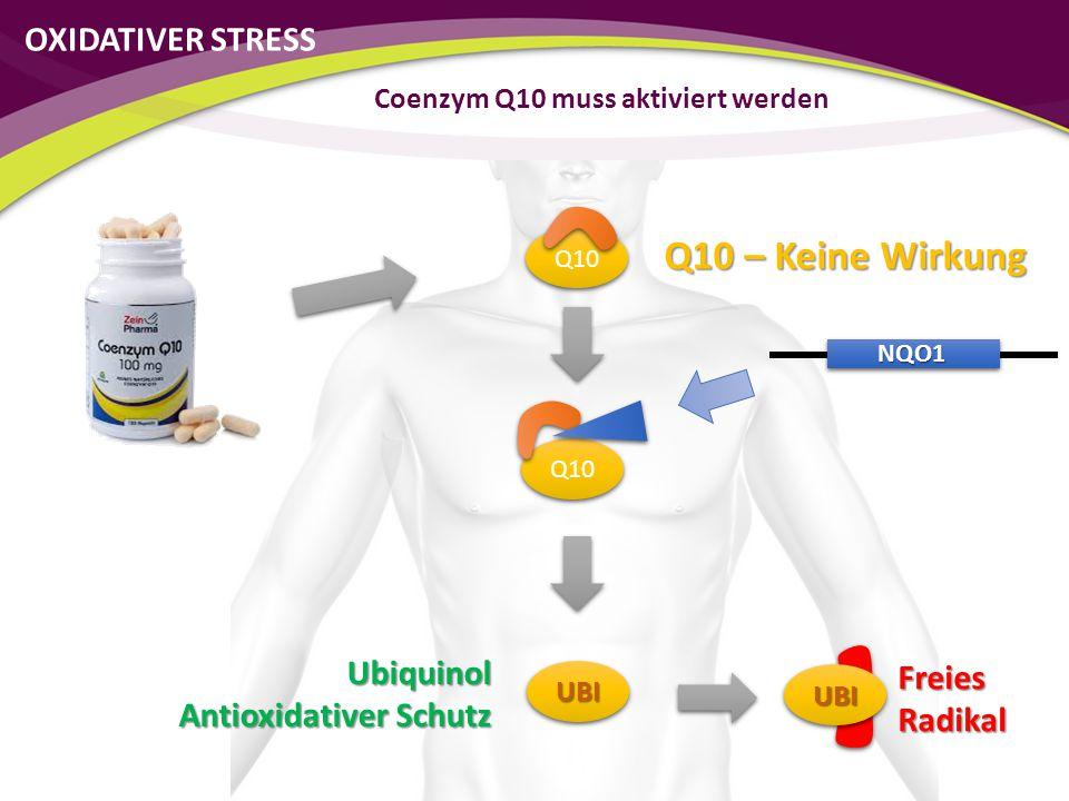 Q10 NQO1 UBIUBI Freies Radikal UBIUBI Ubiquinol Antioxidativer Schutz Coenzym Q10 muss aktiviert werden Q10 – Keine Wirkung OXIDATIVER STRESS