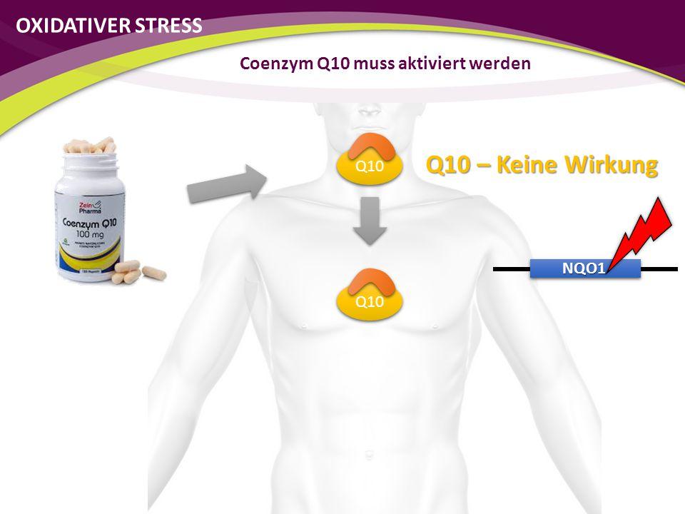 Q10 NQO1 Coenzym Q10 muss aktiviert werden Q10 – Keine Wirkung OXIDATIVER STRESS