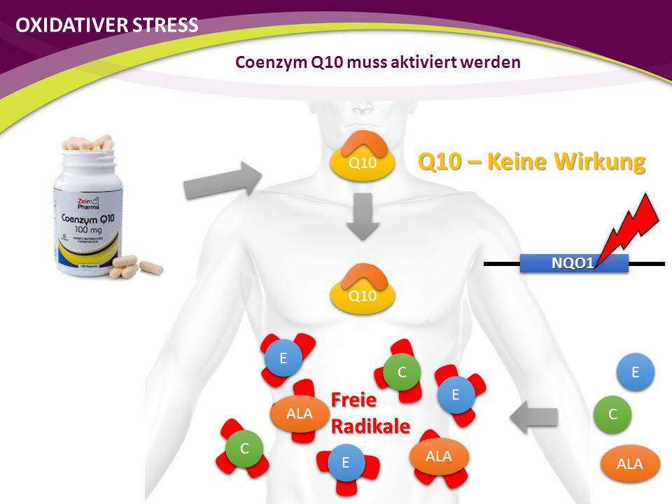 Q10 NQO1 C C E E ALA C C E E E E C C E E Freie Radikale Coenzym Q10 muss aktiviert werden Q10 – Keine Wirkung OXIDATIVER STRESS