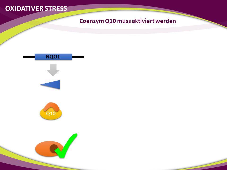 NQO1 Q10 Coenzym Q10 muss aktiviert werden OXIDATIVER STRESS