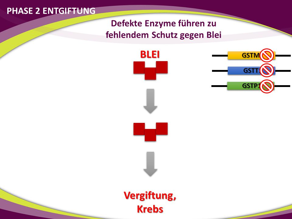GSTM1 GSTT1 GSTP1 Vergiftung, Krebs Defekte Enzyme führen zu fehlendem Schutz gegen Blei BLEI PHASE 2 ENTGIFTUNG