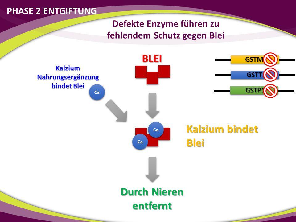 GSTM1 GSTT1 GSTP1 Kalzium bindet Blei Ca Kalzium Nahrungsergänzung bindet Blei Durch Nieren entfernt BLEI Defekte Enzyme führen zu fehlendem Schutz ge