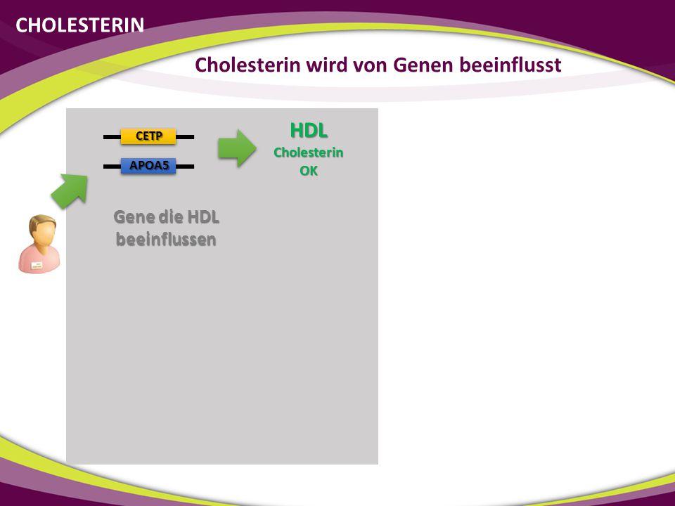 CETP APOA5 HDLCholesterinOK Gene die HDL beeinflussen CHOLESTERIN Cholesterin wird von Genen beeinflusst