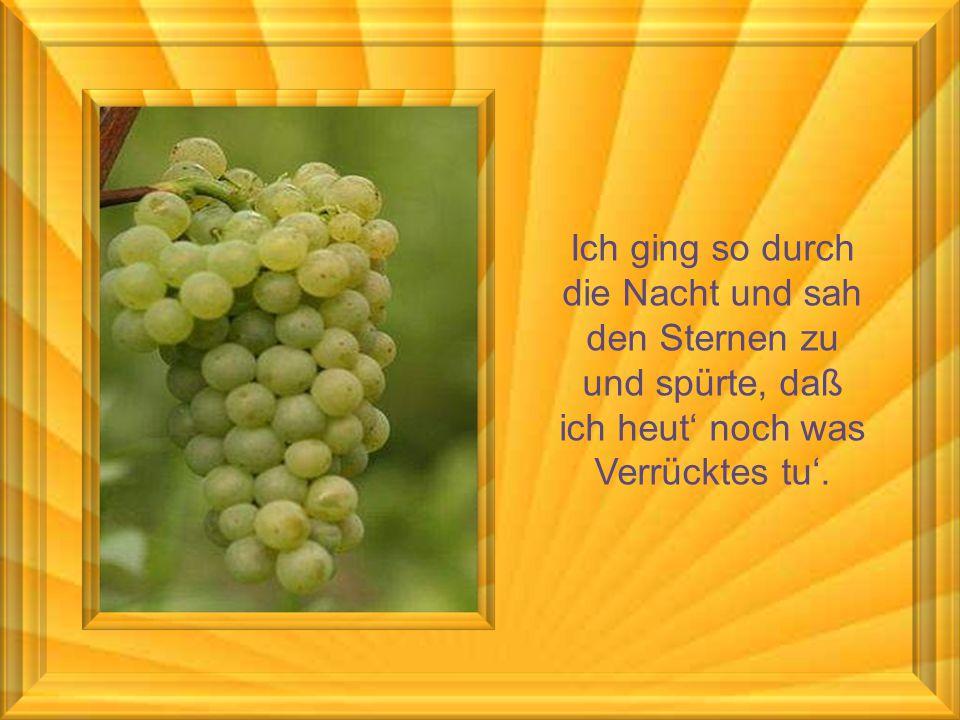 Man trinkt ihn langsam und am besten eisgekühlt. Ein Sommerwein ist wie die Liebe - süß und wild.