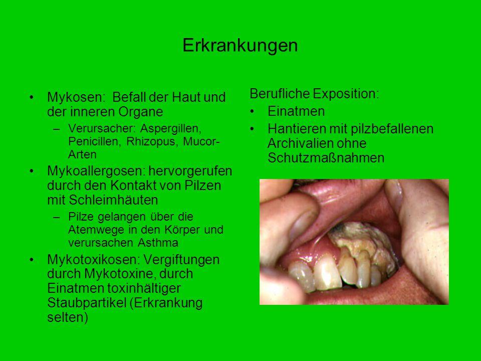 Erkrankungen Mykosen: Befall der Haut und der inneren Organe –Verursacher: Aspergillen, Penicillen, Rhizopus, Mucor- Arten Mykoallergosen: hervorgeruf